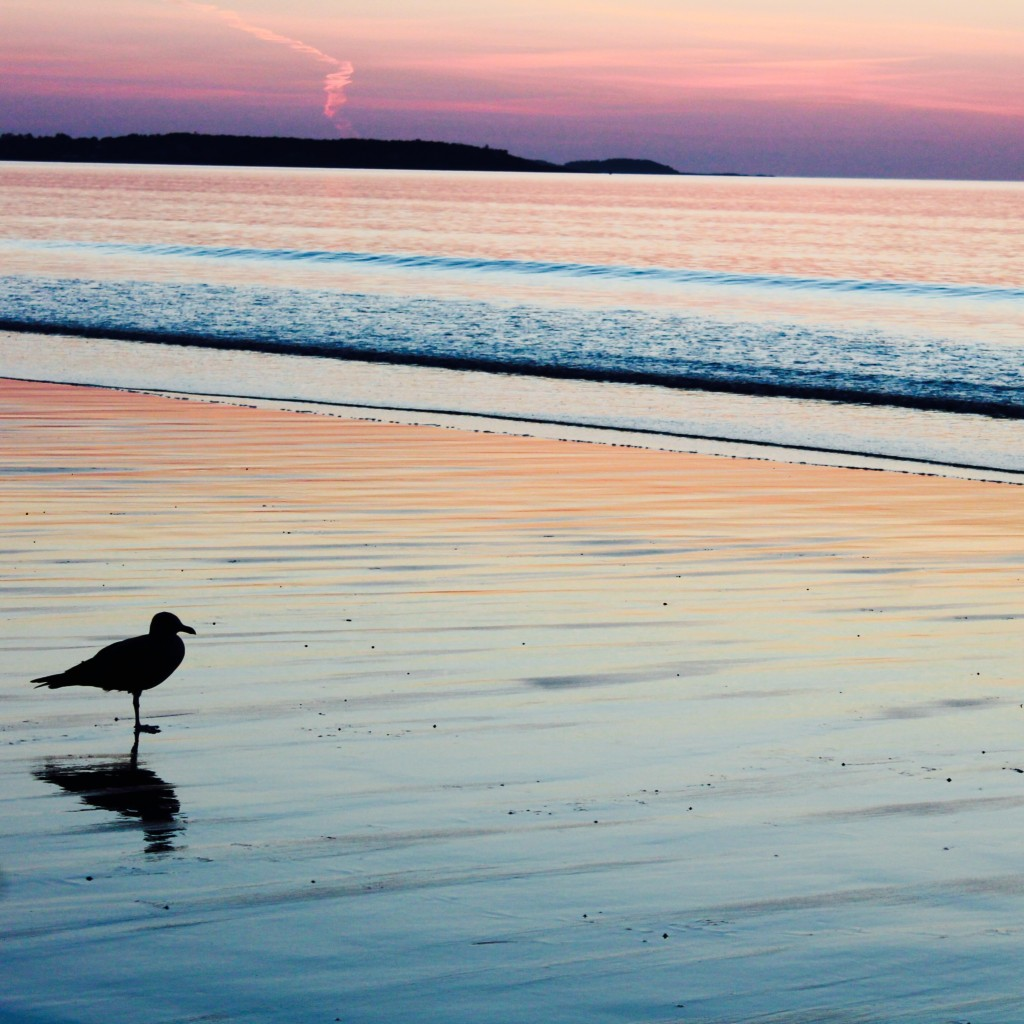 old-orchard-beach-maine-sunrise-bird